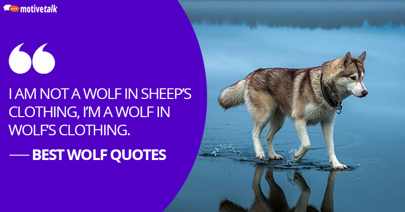 Wolf-Quotes